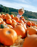 USA, California, girl holding and sitting in field of pumpkins, Half Moon Bay