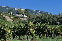 Europe/France/Rhone-Alpes/73/Savoie/Env de Chignin : Vignoble AOC Vins de Savoie et le château