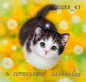 Kayomi, CUTE ANIMALS, paintings, Dandelion_M, USKH47,#AC# illustrations, pinturas ,everyday