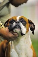 101003 National Dog Show