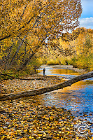 Fall on the Boise Greenbelt