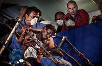 """Siracusa 8 agosto 2004. Il mercantile """"Zuiderdiep"""" che  ha soccorso 75 clandestini -tra i quali quattro donne-, uno dei quali e' morto di stenti. Nella foto i primi soccorsi durante lo sbarco nel porto di Siracusa. Foto Fabrizio Villa"""