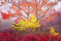 Autumn forest detail shrouded in fog, Graveyard Fields