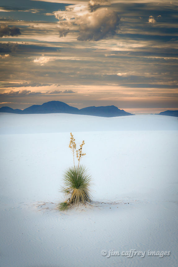A lone yucca at sunset in White Sands National Monument in New Mexico's Tularosa Basin