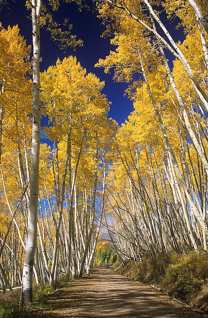 Fall, Last Dollar Road near Telluride, Colorado
