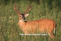 01982-02601  White-tailed Deer (Odocoileus virginianus) 11-point buck in velvet, TN