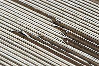 Spargelernte: EUROPA, DEUTSCHLAND, NIESDERSACHSEN, (EUROPE, GERMANY), 28.05.2005: Spargel,  Spargelfeld, Feld, Spargelstechen, Stechen, Ernte, Landwirtschaft, Helfer, Polen, osteuropaeische Erntehelfer, polnische Erntehelfer, Planen auf dem Feld,  Luftbild, Luftansicht Luftbild, Luftbilder, Luftaufnahme, Luftaufnahmen, Uebersicht, Ueberblick, Vogelperspektive,  Europa, Deutschland, Niedersachsen, Lueneburg, Spargel, Spargelfeld, Spargelfelder, stechen, Spargelstechen, Ernte, Landwirtschaft, Feld, Felder, Acker, Erntehelfer, osteuropaeische, polnische, Plane, Planen,  ernten, Gemuese, Spargelgemuese, Saison, Spargelsaison, Anbau, Arbeit, Arbeiter, arbeiten # acre, aerial photo, aerial photograph, array, arrays, asparagus, awning, blanket, blue-collar worker, building extension, chore, crop, europe, farming, field, fields, germany, harvest, harvest aid, harvests, husbandry, job, jobber, jobbers, labor, laborer, labour, labourer, labourers, lower saxony, open country, pad, pads, pang, picking, polish one, rural economoy, season, stint, tarpaulin, to plan, to schedule, toiler, vegetable, vegetables, work, worker, workers, working man, workman, workmen, works, Aufwind luftbilder.c o p y r i g h t : A U F W I N D - L U F T B I L D E R . de.G e r t r u d - B a e u m e r - S t i e g  1 0 2,  .2 1 0 3 5  H a m b u r g ,  G e r m a n y.P h o n e  + 4 9  (0) 1 7 1 - 6 8 6 6 0 6 9 .E m a i l      H w e i 1 @ a o l . c o m.w w w . a u f w i n d - l u f t b i l d e r . d e.K o n t o : P o s t b a n k    H a m b u r g .B l z : 2 0 0 1 0 0 2 0  .K o n t o : 5 8 3 6 5 7 2 0 9.C  o p y r i g h t   n u r   f u e r   j o u r n a l i s t i s c h  Z w e c k e, keine  P e r s o e n  l i c h ke i t s r e c h t e   v o r  h a n d e n,  V e r o e f f e n t l i c h u n g  n u r    m i t  H o n o r a r  n a c h  MFM, N a m e n s n e n n u n g und B e l e g e x e m p l a r !...