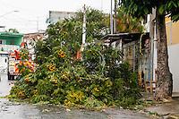 SÃO PAULO, SP, 02.11.2015 - ARVORE-SP - Uma árvore caiu na rua Árvore de Dragão no bairro de São Miguel Paulista na região leste da cidade de São Paulo, após forte chuva nesta segunda-feira,02. (Foto: Vanessa Carvalho/Brazil Photo Press)