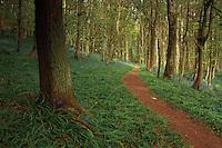 Bluebell Path, Portpatrick, Galloway