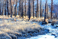 Soft light illuminates dormant cottonwood trees and frosted grasses on this sub-zero December morning.