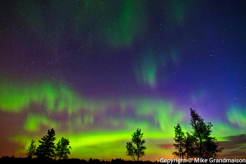 Northern lights and trees(Aurora borealis), Birds Hill Provincial Park, Manitoba, Canada