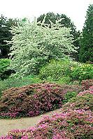 AC34-004b  Flower Garden - Japanese style garden.