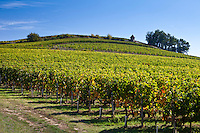 Vineyard on hill slopes at St Emilion in the Bordeaux wine region of France