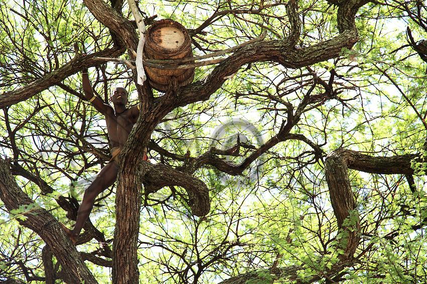 In the land of the Bana tribe, a beekeeper inspects a hive when the colony is full at work and there are fewer bees inside it. African bees are known for their aggressiveness.///Dans le pays de la tribu Bana, un éleveur inspecte une ruche quand la colonie est en plein travail et qu'il y a moins d'abeilles à l'intérieur. Les abeilles africaines sont réputées pour leur agressivité.