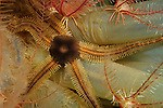 Brittle Stars & Sea Squirts
