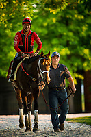 BALTIMORE, MD - MAY 19: Classic Empire walks back to the barn with Normand Casse as he completes his final preparations for the Preakness Stakes at Pimlico Race Course on May 19, 2017 in Baltimore, Maryland. (Photo by Alex Evers/Eclipse Sportswire/Getty Images)