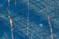 Rock detail in boreal forest<br />