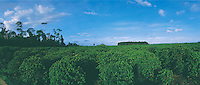 Agriculture. Atlantic rainforest was forced to be replaced by plantations. City: Jaguaré; State: Espírito Santo, Brazil.