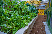 Lush raised bed organic vegetable in backyard garden