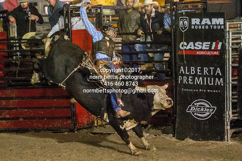 The RAM Rodeo Tour at the Markham Fair <br /> Markham, Ontario, Canada<br /> 30Sept and 01Oct 2017<br /> <br /> normbetts@canadianphotographer.com<br /> &copy;2017, Norm Betts, photographer<br /> 416 460 8743