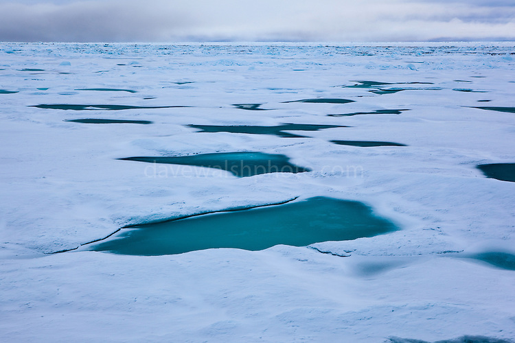Arctic Sea Ice, Fram Strait, between Greenland and Svalbard, September 2009. In August 2012, Arctic sea ice hit a record minimum - this will affect weather and the global climate, as the ice cap reflects much of the sun's solar energy back into to space. With sea ice melting away, the dark water below absorbs more solar energy, which in turn causes more melting.
