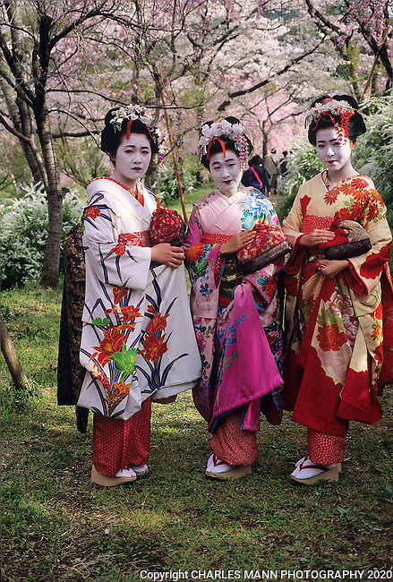 A trio of Miko Girls walk in the  Hara-Dani Cherry Garden in spring.