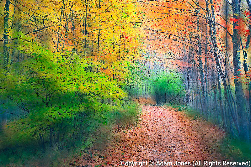 Soft focus view of footpath through autumn forest, Acadia National Park, Maine
