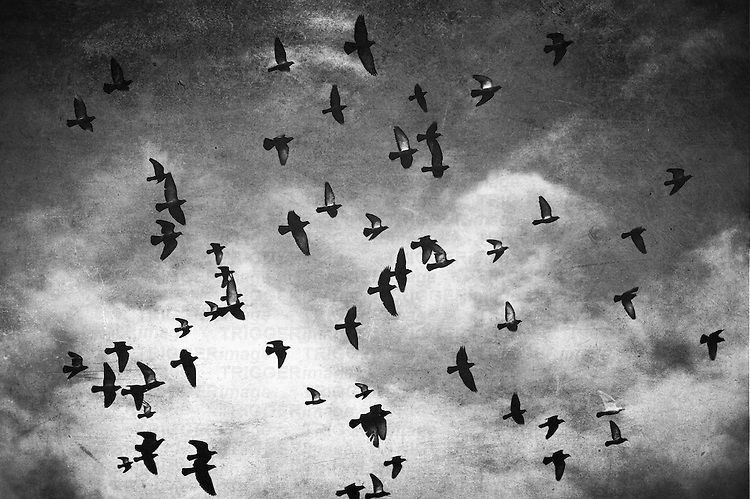 A flock of birds flying over Granville Island Market. Black and white with clouds and texture.