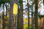 A yellow trail blaze (marks the hiking trail) on a hardwood tree along the Mt Tecumseh Trail (ski area side) in the White Mountains of New Hampshire.
