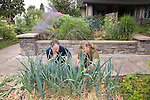 """Andrew and Patricia Nimelman cosult with Donna Smith (otherwise known as """"Your Backyard Farmer) at their home in NE Portland, OR.  Donna instructing Andrew about how to mound dirt around leeks to extend the white area of the leek."""