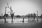 african baobab in burkina faso e benin