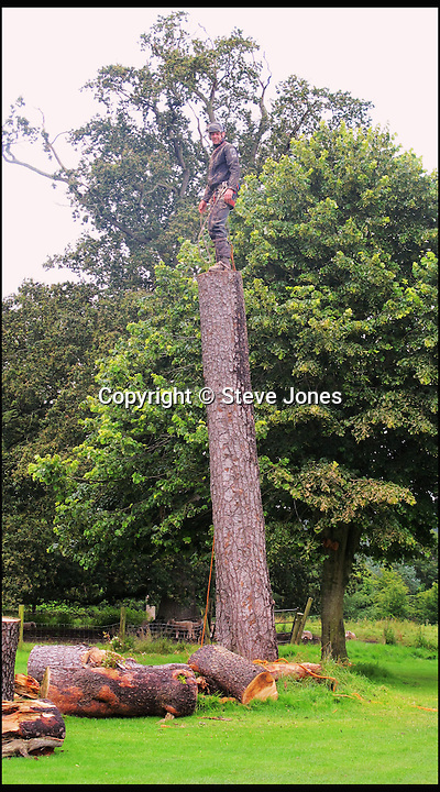 BNPS.co.uk (01202 558833)<br /> Pic: SteveJones/BNPS                                <br /> <br /> Bruce Kerry begins the process of carving the cricket bat.<br /> <br /> A village cricket club has turned a beloved tree that has stood on the boundary of their ground for 125 years into a giant carving of a cricket bat after it was condemned.<br /> <br /> The 16ft tall wooden bat took a tree surgeon and an assistant 18 months to carve after members of Shobrooke Park Cricket Club couldn't bring themselves fell the storm-damaged Scots Pine.<br /> <br /> The tree was planted on the eastern edge of the boundary when the club in Crediton, Devon, was established in 1890 and has been a feature ever since.