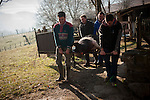 Some men move the dead pig in traditional way pig slaughtering. Legasa (Basque Country). January 7, 2017. The slaughter traditionally takes place in the autumn and early winter and the work often is done in the open. (Gari Garaialde / Bostok Photo)