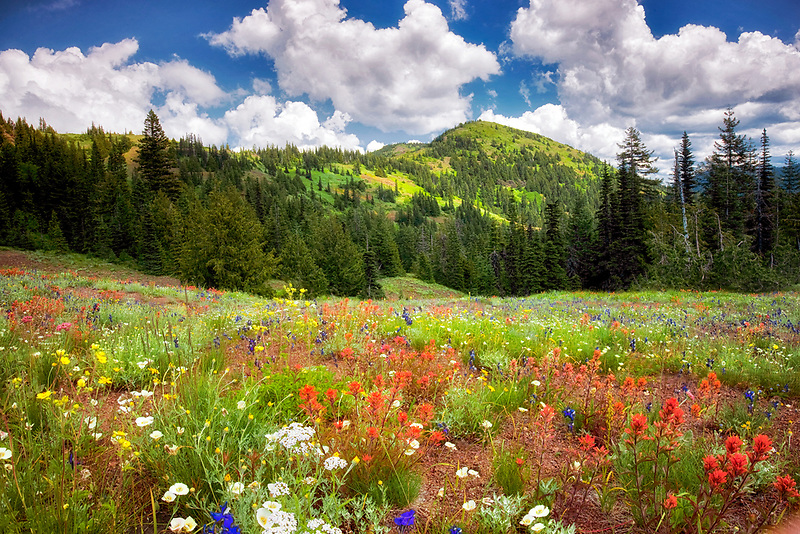 Echo Mountain with wildflowers and clouds. Linn County, Oregon.
