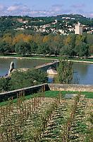 Europe/France/Provence-Alpes-Côte- d'Azur/84/Vaucluse/Avignon: depuis le Palais des Papes vue sur le Rhone avec en fond Villeneuve-les-Avignon- et le pont St-Bénézet; au premier plan la vigne du Palais des Papes