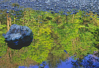The Middle Prong of the Little River provides for reflections of spring foliage in Great Smoky Mountains National Park