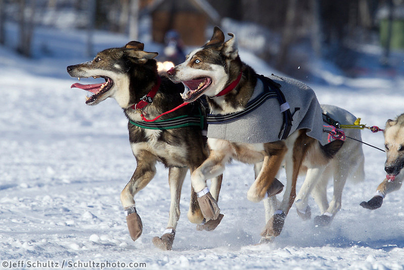 Jodi Bailey's lead dogs run on Long Lake in Willow, Alaska duirng the re-start of the 2011 Iditarod.