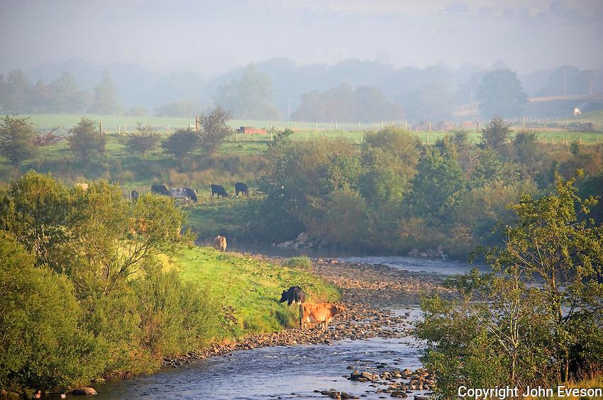 Misty view, Whitewell, Lancashire....Copyright..John Eveson, Dinkling Green Farm, Whitewell, Clitheroe, Lancashire. BB7 3BN.01995 61280. 07973 482705.j.r.eveson@btinternet.com.www.johneveson.com