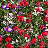 Gisela, FLOWERS, BLUMEN, FLORES, photos+++++,DTGK2017,#f#