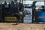 462 Wee See Monsters of Arianna Floyd/ Boyd-Floyd during the American Bucking Bull, Incorporated event in Decatur, TX - 6.3.2016. Photo by Christopher Thompson