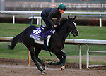 October 30, 2018 : Soldier's Call in preparation for the Breeders' Cup on October 30, 2018 in Louisville, KY.  Candice Chavez/ESW/CSM