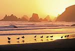 seagulls on beach at sunset, Cape Ferrello, Oregon