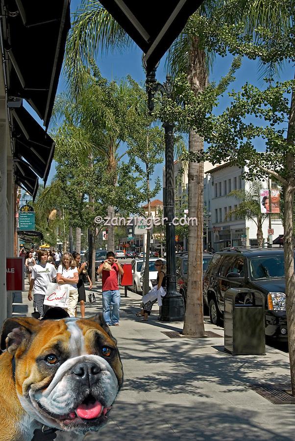 Old, Pasadena, CA, California, Colorado Blvd,