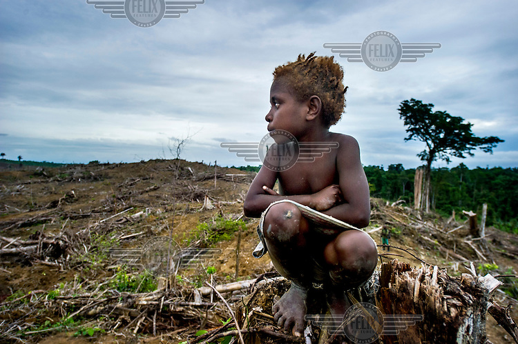 A Mooi child sits on the stump of a tree looking out over an area of deforested land that the Mooi community, from the Sorong Regency, sold to a palm oil company. They have been left in extreme poverty without access to the forest which once supported them. In many cases the Mooi claimed that they have been deceived into selling their lands for a fraction of its value.