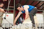 Local shearer, Brendan O'Sullivan, shearing at the Sneem Family Festival shearing competition.