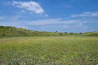 Dune slacks at Kenfig Nature Reserve, South Wales