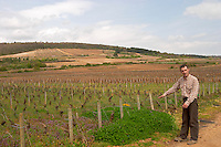 pinot noir vineyard, Philippe Bernard, owner winemaker clos st louis fixin cote de nuits burgundy france