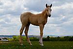 Proud pony