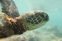 Oahu wildlife