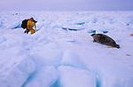 Gavriel Jecan photographing harp seal pups